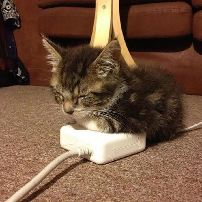 Animals That Are Addicted To Warmth (33 pics)