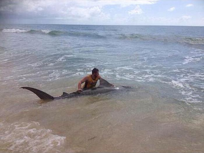 Fisherman Wrestles With A Tiger Shark (5 pics)