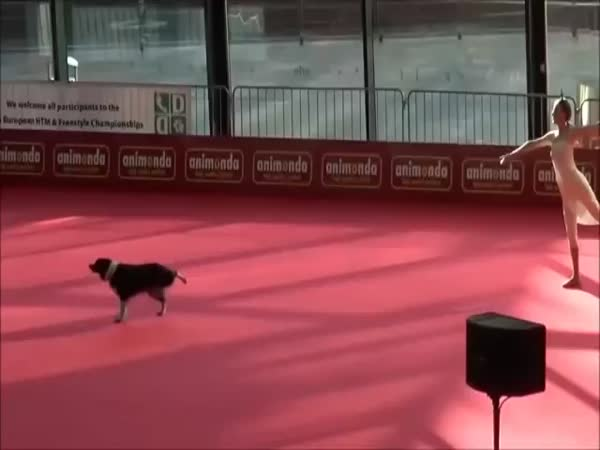 Dog's Performance