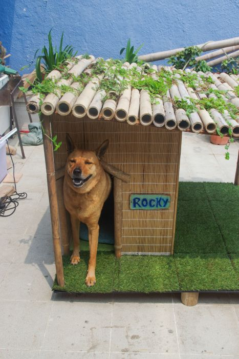 The Perfect Dog House For A Tropical Environment (11 pics)