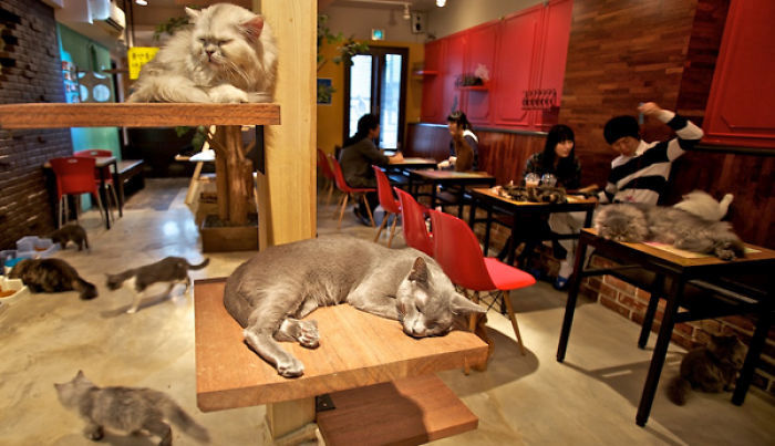 Crazy Cafes Made For Animal Lovers (12 pics)
