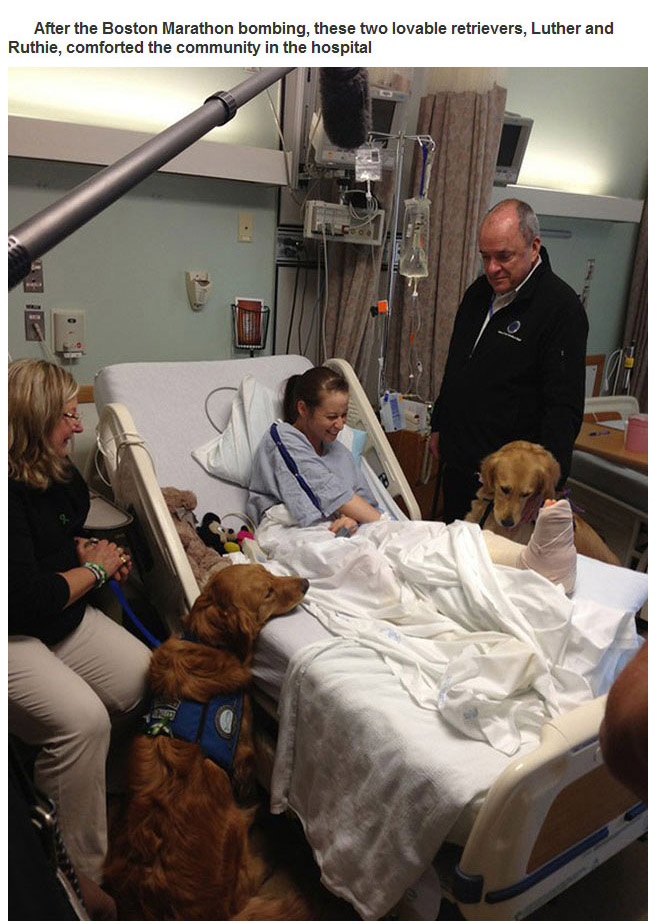 Therapy Dogs (29 pics)