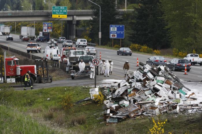 Millions Of Bees Flee From An Overturned Truck On The Seattle Highway (11 pics)