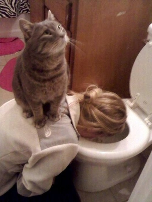 Cats Who Got Caught Being Funny (42 pics)