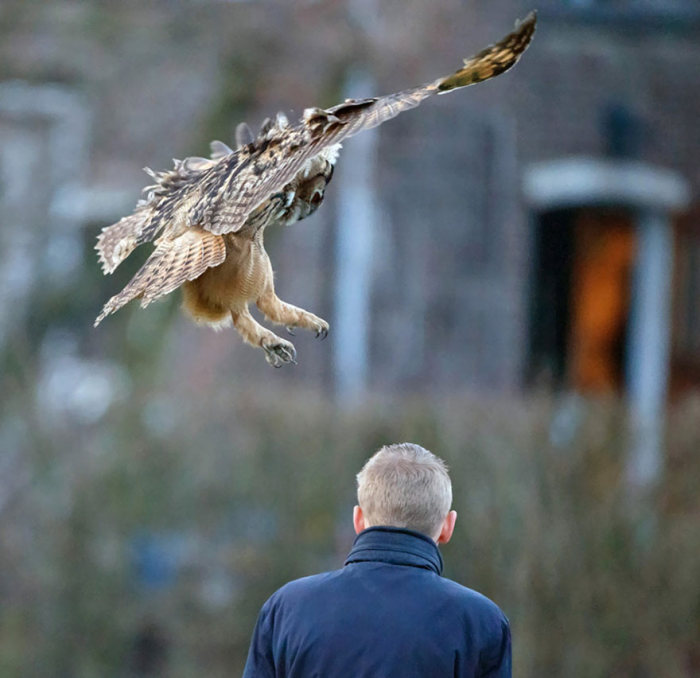 This Dutch Owl Loves Landing On People's Heads (8 pics)