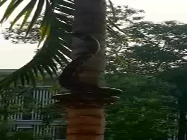 Snake Crawling On Tree