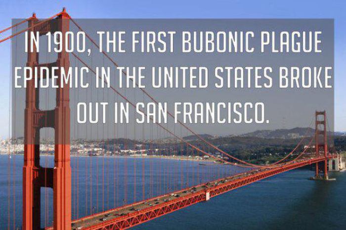 Bizarre But True Facts About The United States Of America (22 pics)