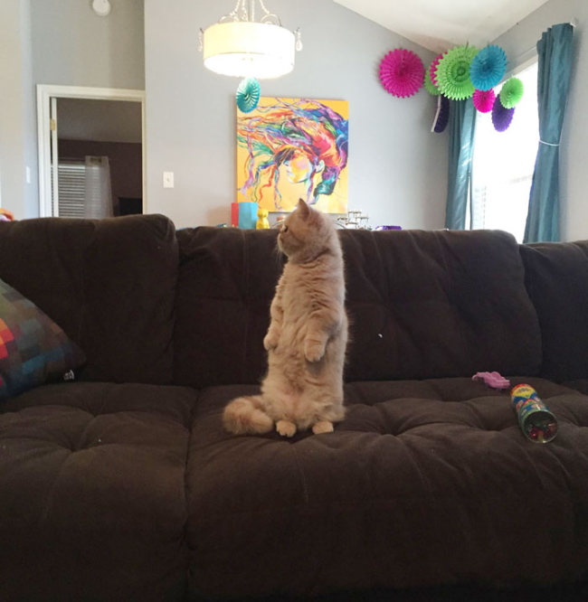 This Cat Prefers Standing On 2 Legs Like A Human (9 pics)