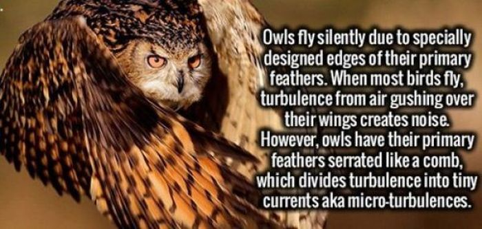 Become A Knowledge Buff With These Fun And Interesting Facts (59 pics)