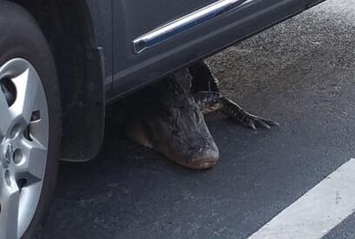 There's A Whole Lot Of Nope Under This Car (2 pics)