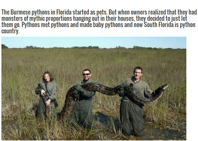 This Is A Good Reason To Stay Out Of Florida (3 pics)
