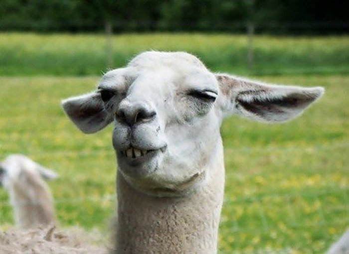 These Animals Have No Idea How Funny They Are (45 pics)