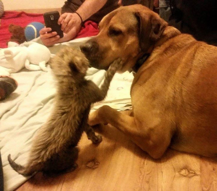 This Cheetah Cub And Puppy Are The Best Of Friends (6 pics)