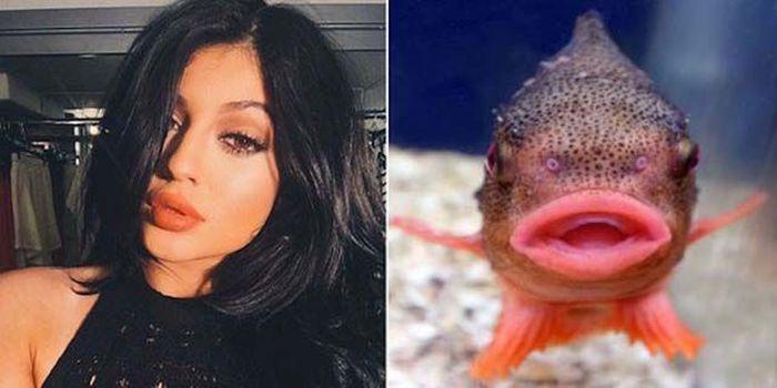 Hollywood fish lips