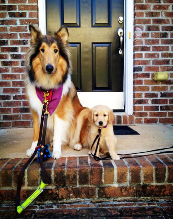 Dog Best Friends That Always Have To Be Together (38 pics)