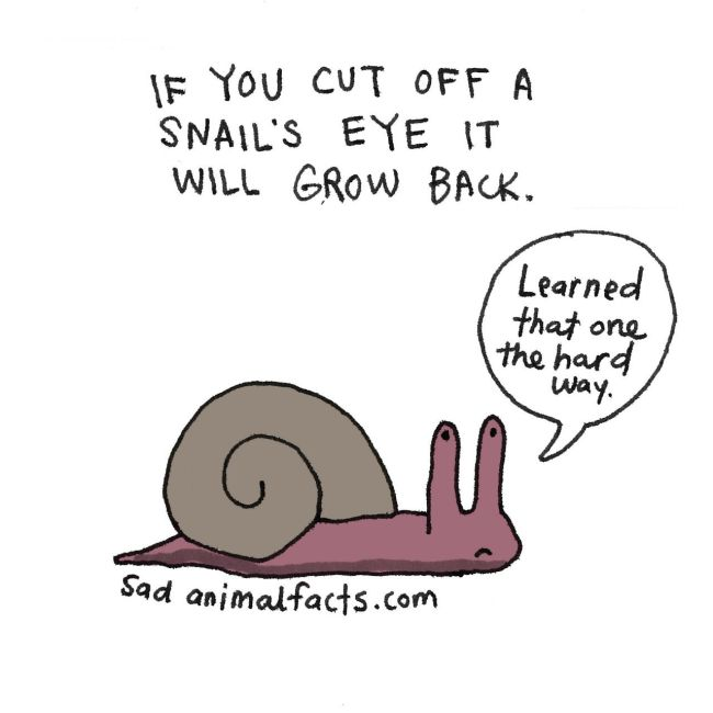 Sad Facts About Animals (18 pics)