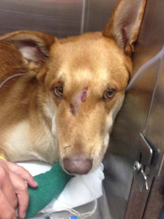 Dog Saves His Owner From A Deadly Rattlesnake (7 pics)