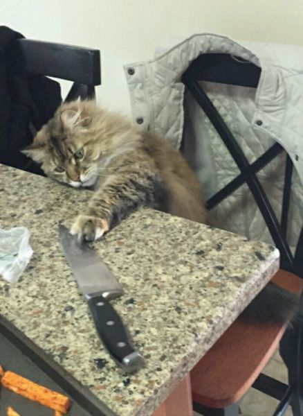 26 Moments Only Cat Owners Can Relate To (26 pics)