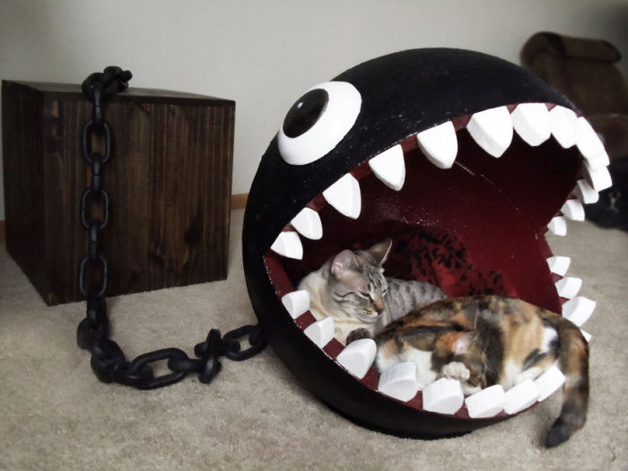 Meet The Cats That Sleep Inside A Chain Chomp From Super Mario Bros. (11 pics)