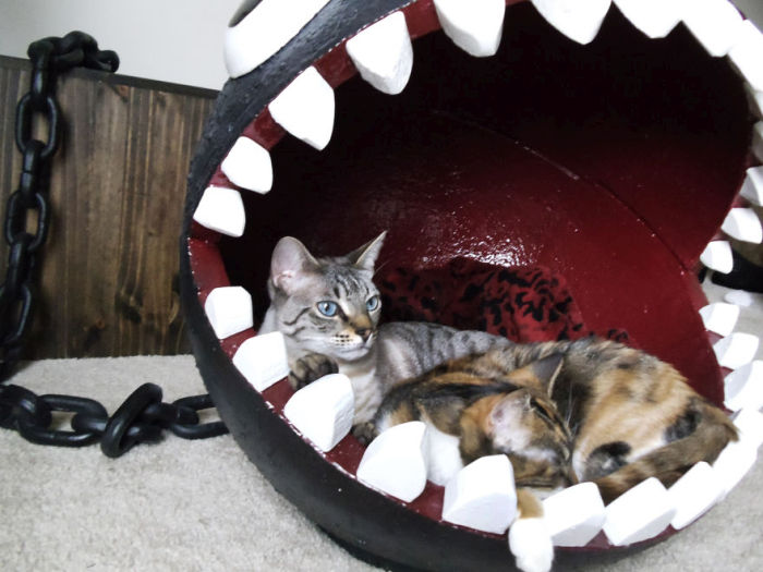 Meet The Cats That Sleep Inside A Chain Chomp From Super Mario Bros. (11 pics)