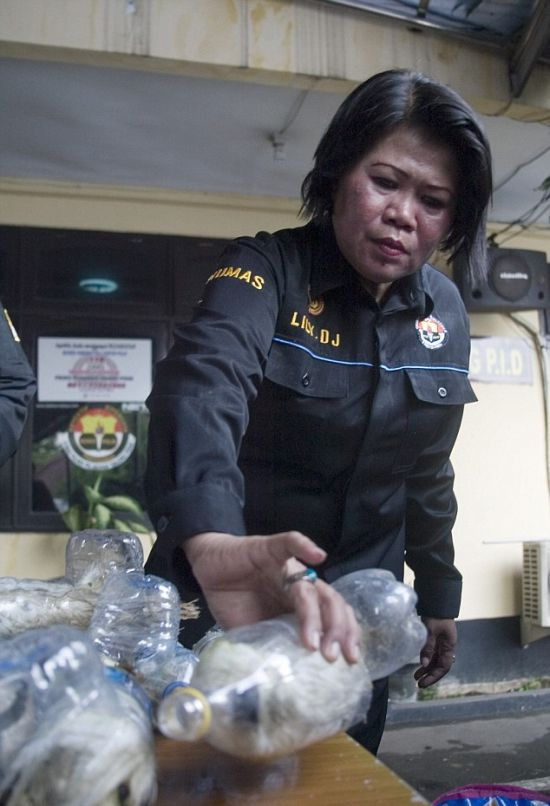 Indonesian Poachers Get Busted (6 pics)