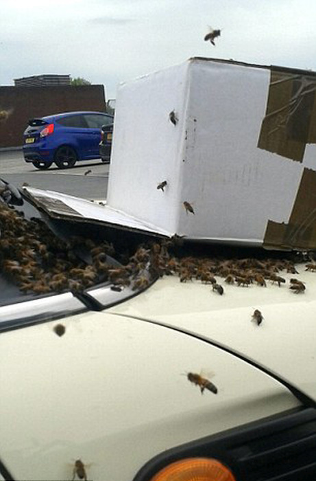 When 20,000 Bees Attack Your Car (6 pics)