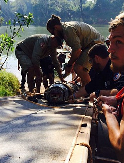 It Took Six Men To Capture This Monster Crocodile (4 pics)