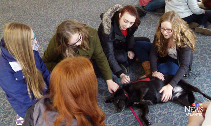 University Creates A Special Puppy Room To Help Students With Stress (5 pics)