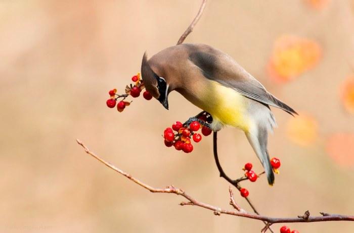 Wildlife τις φωτογραφίες που αιχμαλωτίζει με την ομορφιά του τον έξω κόσμο (41 pics)
