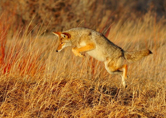 Wildlife Photos That Capture The Beauty Of The Outside World (41 pics)