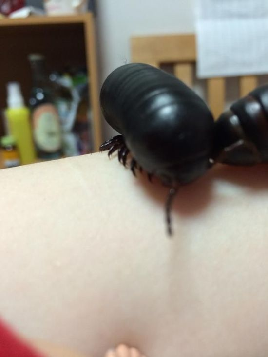 Young Girl Keeps A Giant Insect As A Pet (4 pics)