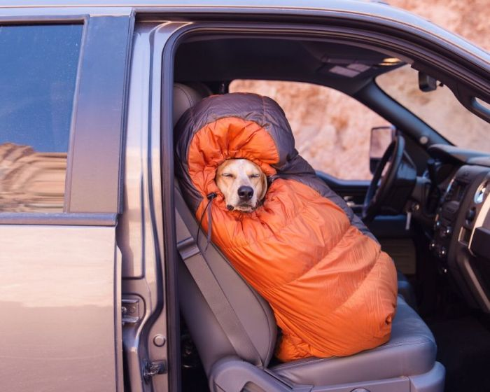 This Lucky Rescue Dog Gets To Go On Amazing Adventures (21 pics)