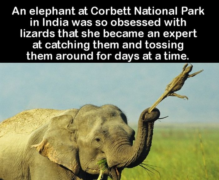 Fun Facts You Can Use To Impress Your Friends (27 pics)