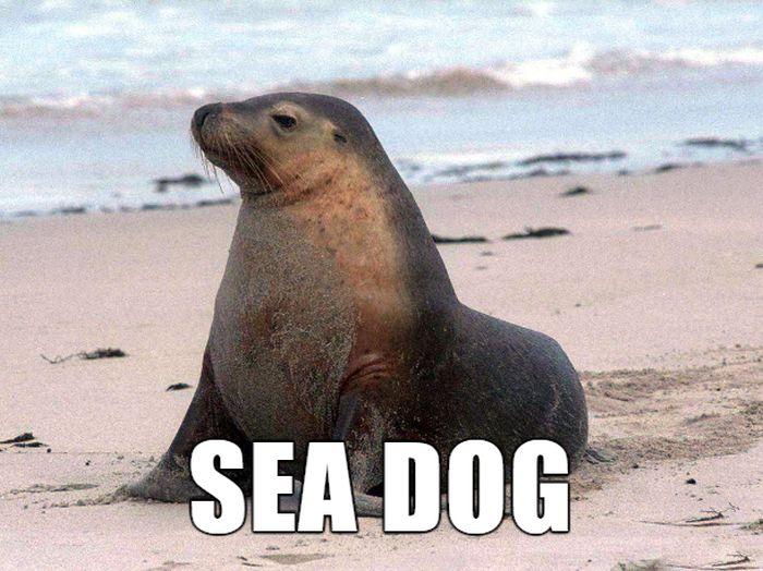 German Animal Names With Funny English Translations (10 pics)