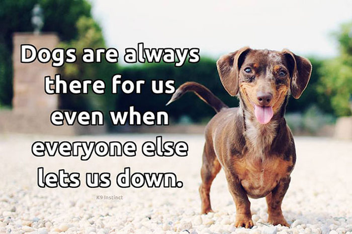 A Tribute To Dogs Everywhere (29 pics)