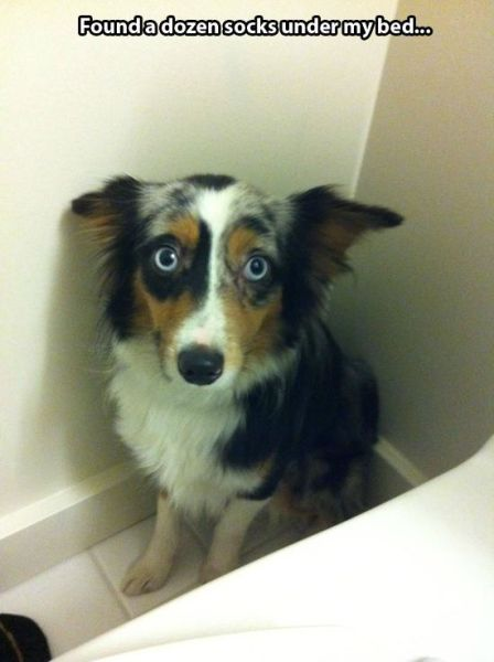 These Animals Are Clearly Guilty (21 pics)