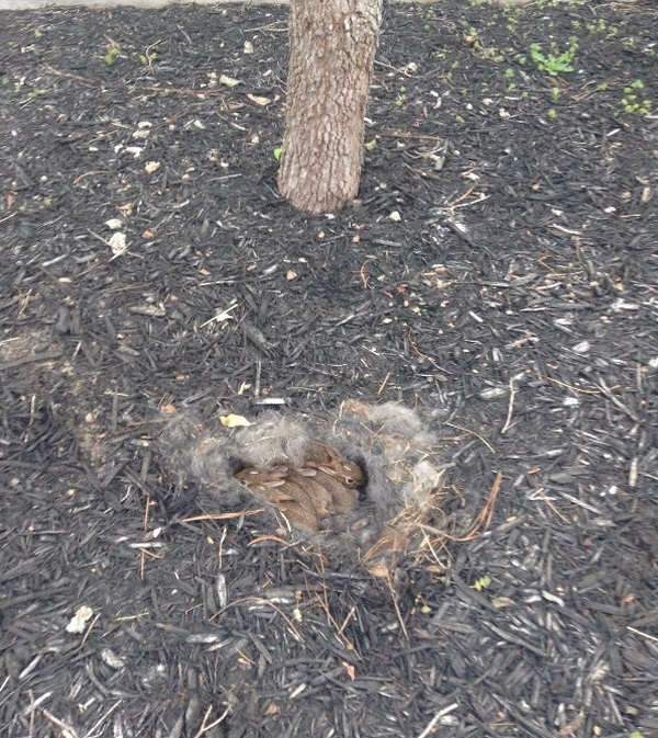 These Homeowners Found An Unusual Nest In Their Yard (6 pics)