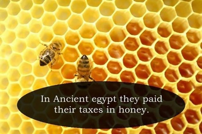Fill Your Brain Up With These Fun Facts (18 pics)