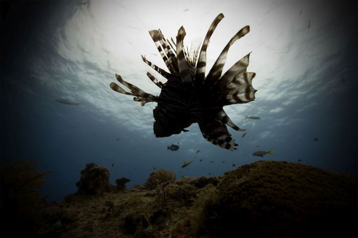 This Guy Stepped Out Of His Comfort Zone And Into Underwater Photography (17 pics)