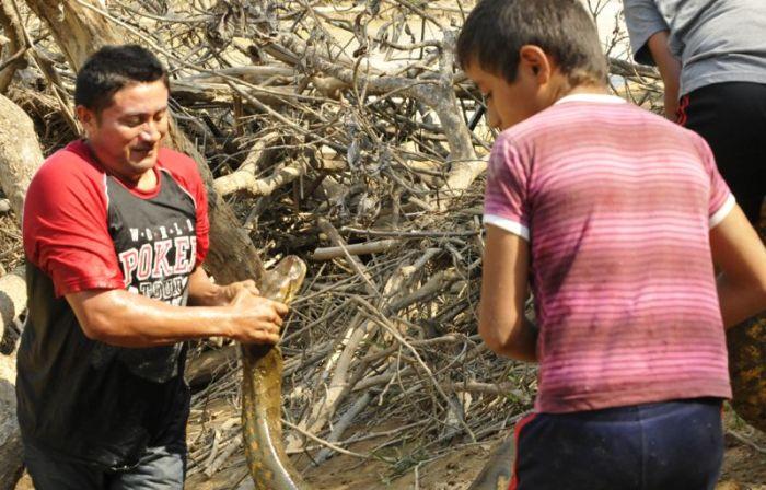 Anaconda Gets Rescued (8 pics)