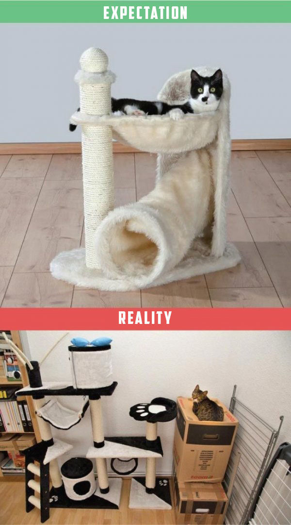 What It's Like To Own A Cat: Expectations Vs Reality (22 pics)