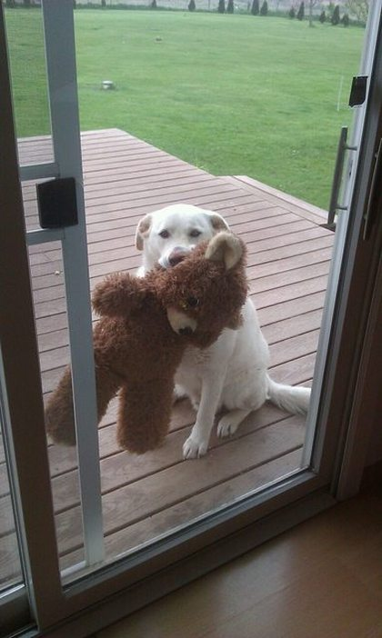 These Animals Are Begging You To Let Them In (22 pics)