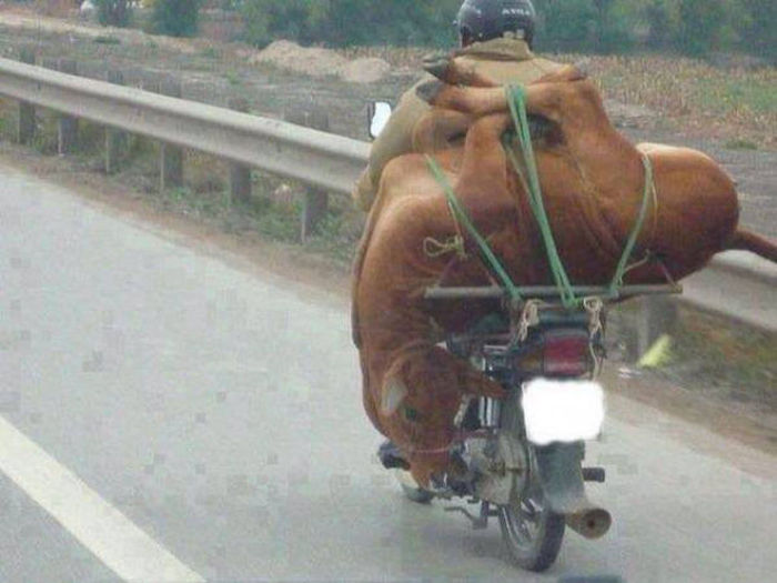 These People Prove That Anything Can Be Transported On A Motorcycle (27 pics)