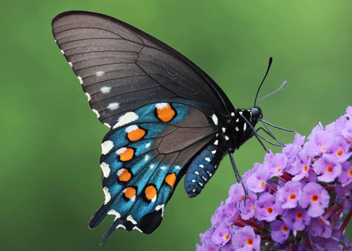 Before And After Transformations Of Moths And Butterflies (36 pics)