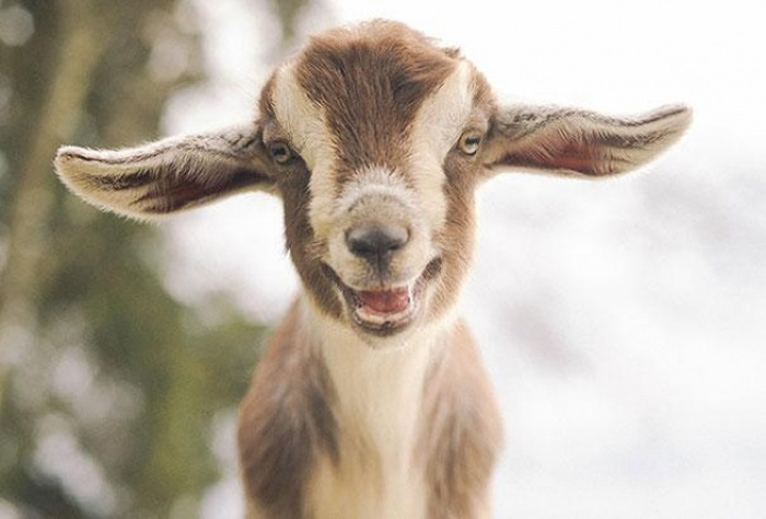 Animals Are Just So Cute When They're Happy (30 pics)