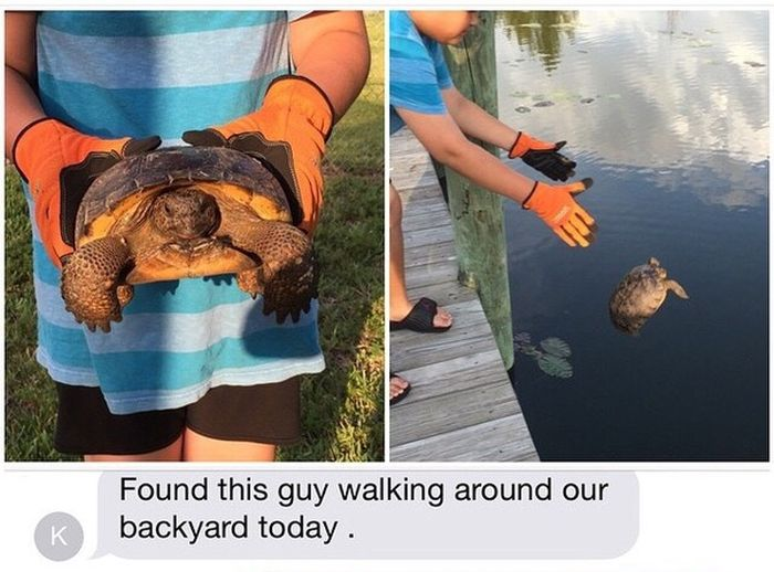 This Guy Meant Well When He Rescued A Tortoise (2 pics)