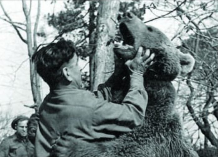 Meet Voytek The Bear That Was Raised By Soldiers (18 pics)