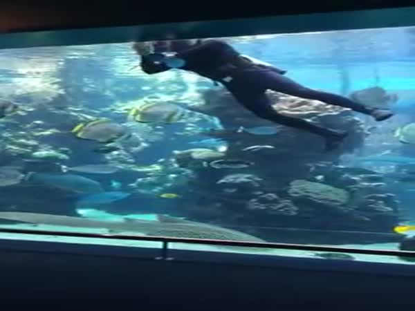 Diver In The Aquarium