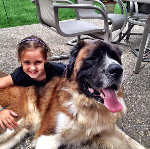 Proof That Dogs Make The Best Pets Ever (47 pics)