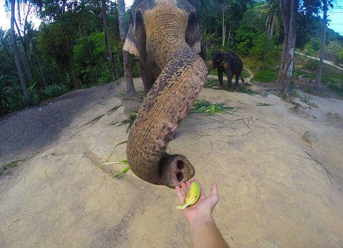 Meet The Elephant That Loves Taking Selfies (4 pics)
